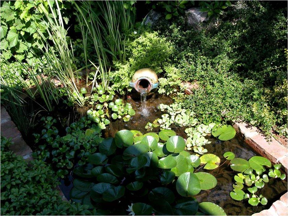 Petits bassins pour espace restreint aquaplantes - Petit bassin baignade colombes ...