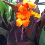 Plantes de lieux humides tropicales