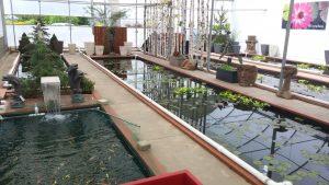 plante aquatique st-augustin de desmaures