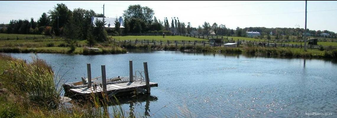 Système d'aération d'étang et de marais